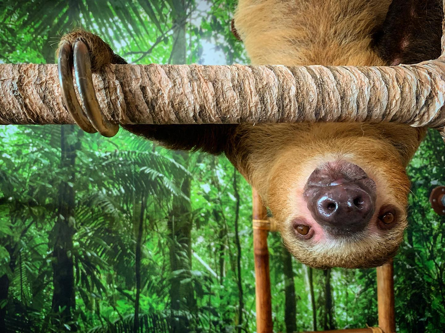 """Meet """"Sandy and Sid"""" at The Sloth Spot"""